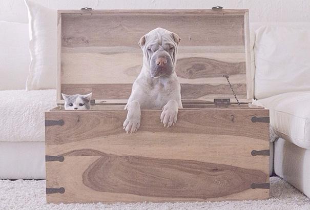 cane-shar-pei-paddington-amicizia-gatto-butler-annie-02