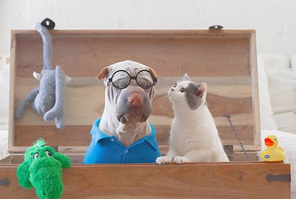 cane-shar-pei-paddington-amicizia-gatto-butler-annie-04