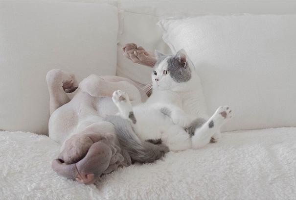 cane-shar-pei-paddington-amicizia-gatto-butler-annie-05