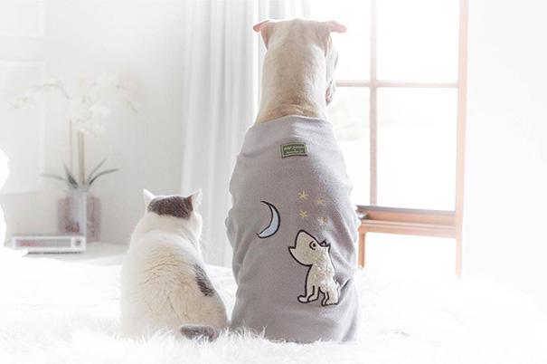 cane-shar-pei-paddington-amicizia-gatto-butler-annie-07