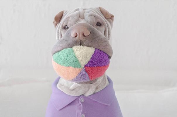 cane-shar-pei-paddington-amicizia-gatto-butler-annie-10