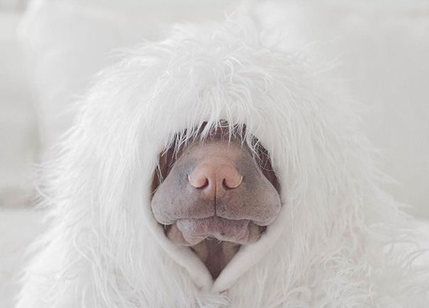 cane-shar-pei-paddington-amicizia-gatto-butler-annie-15