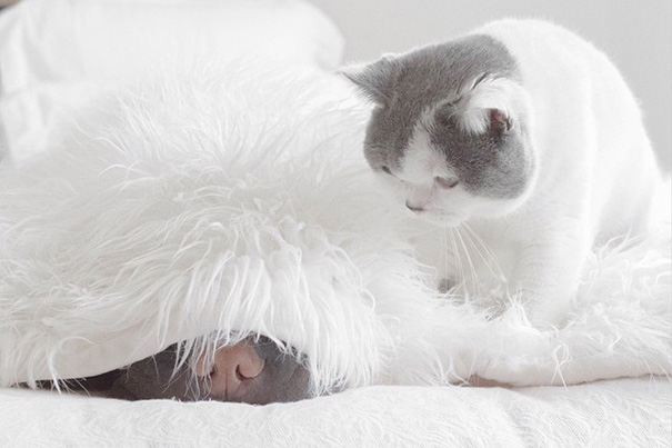 cane-shar-pei-paddington-amicizia-gatto-butler-annie-16