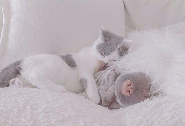 cane-shar-pei-paddington-amicizia-gatto-butler-annie-17