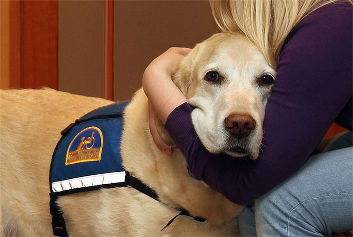 cani-aiutano-testimoni-aule-tribunali-america-courthouse-dogs-01