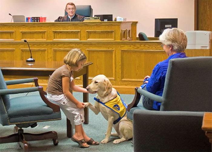 cani-aiutano-testimoni-aule-tribunali-america-courthouse-dogs-03