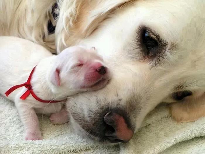 cani-con-cuccioli-02