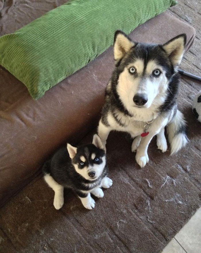 cani-con-cuccioli-04