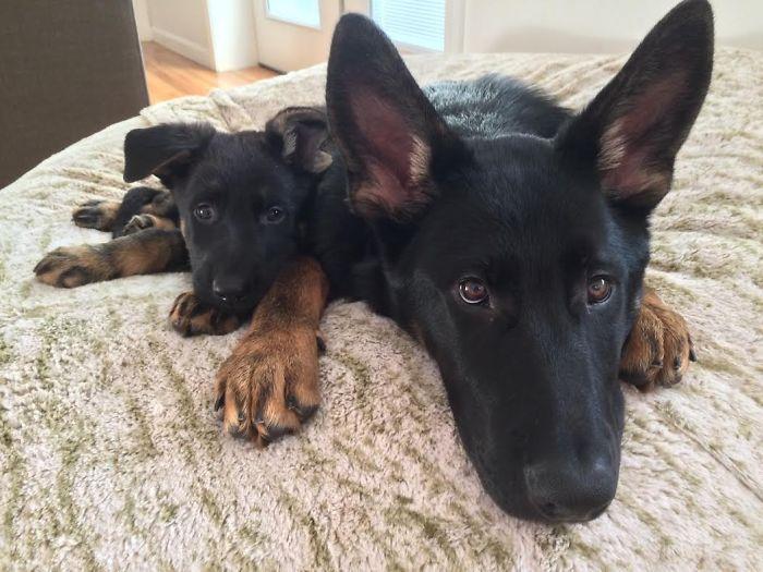 cani-con-cuccioli-06