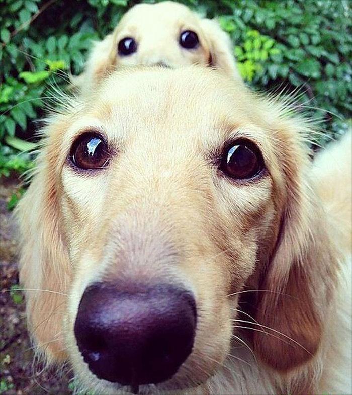 cani-con-cuccioli-07