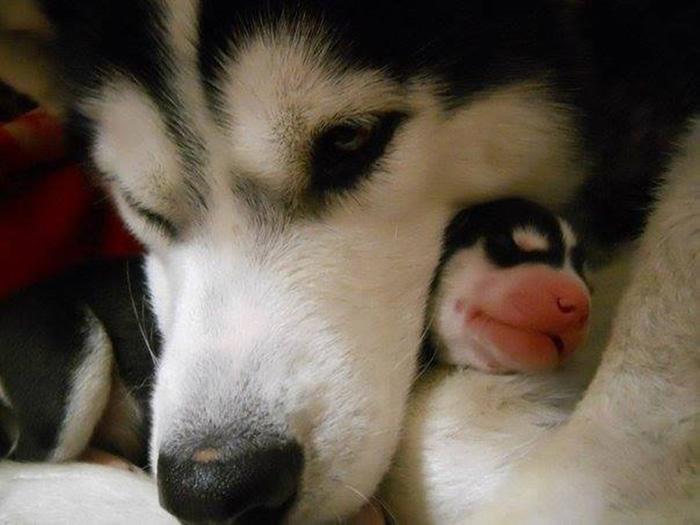 cani-con-cuccioli-11
