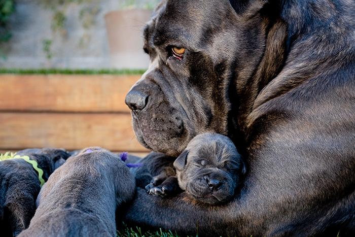 cani-con-cuccioli-12