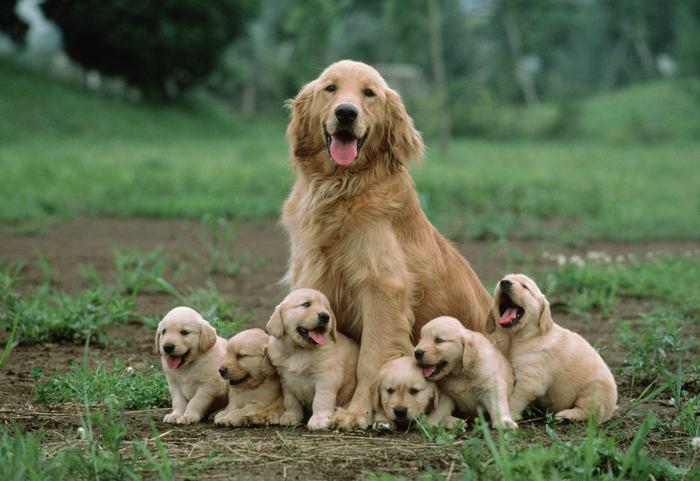 cani-con-cuccioli-15