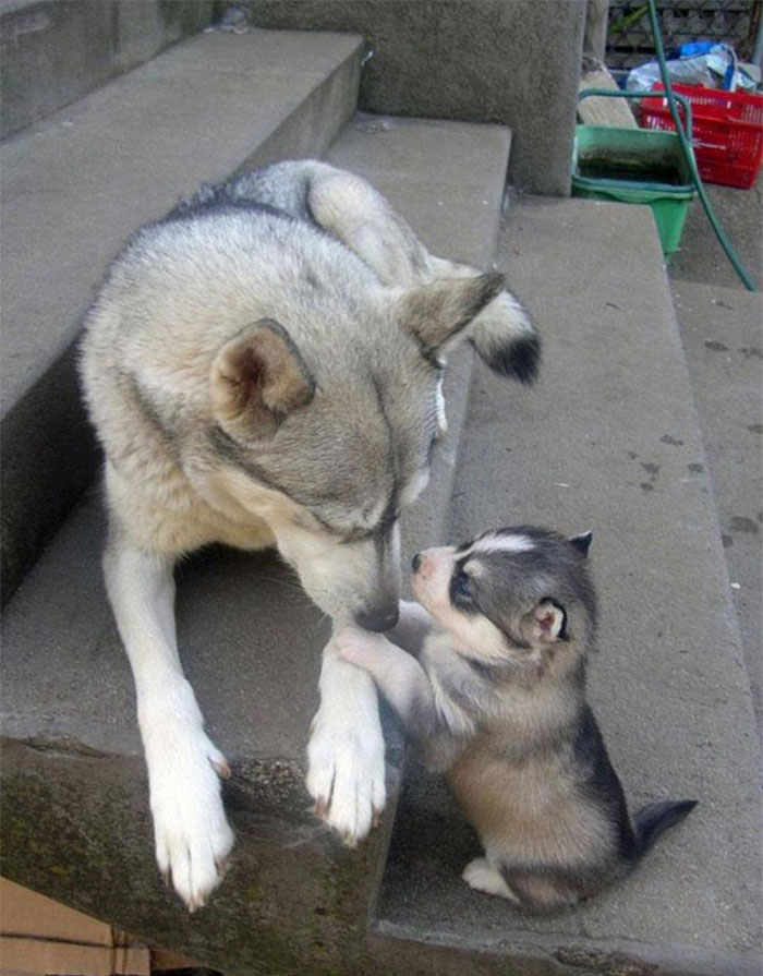 cani-con-cuccioli-17