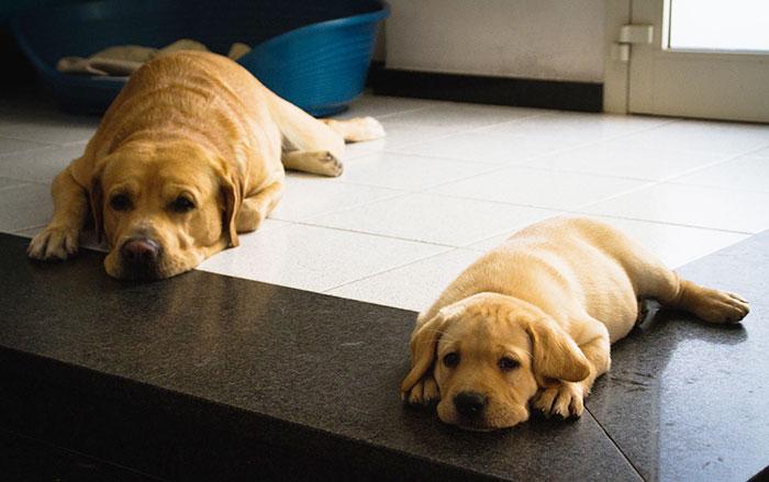 cani-con-cuccioli-21