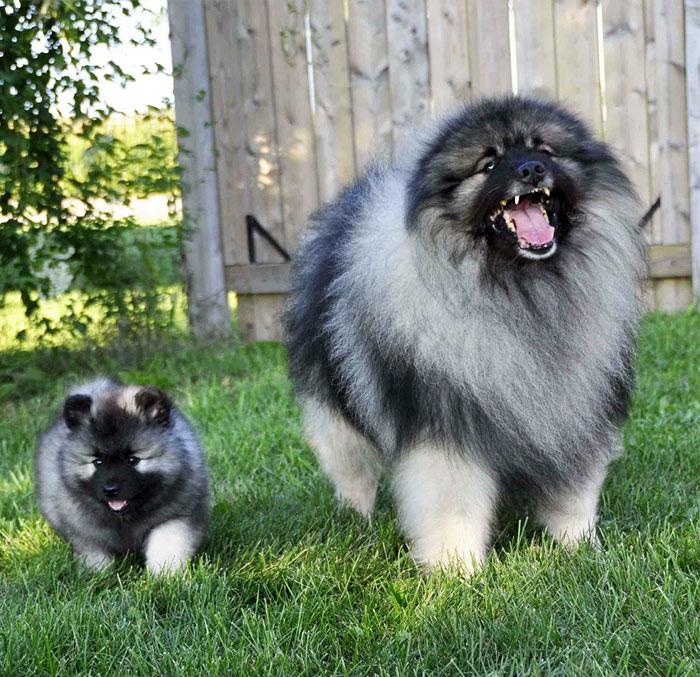 cani-con-cuccioli-22