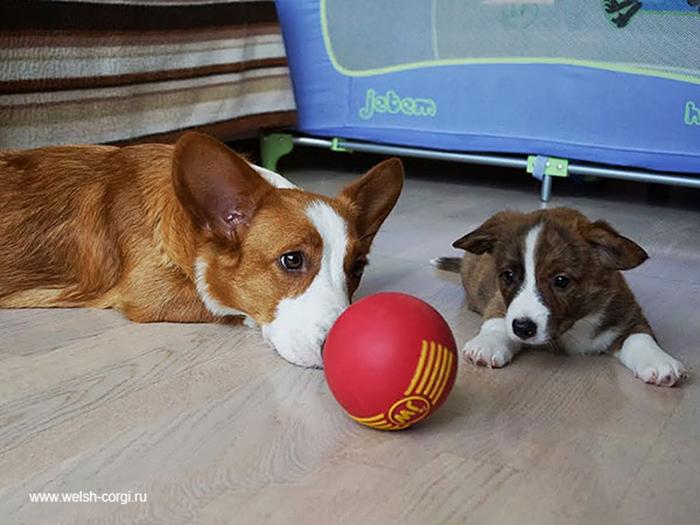 cani-con-cuccioli-28