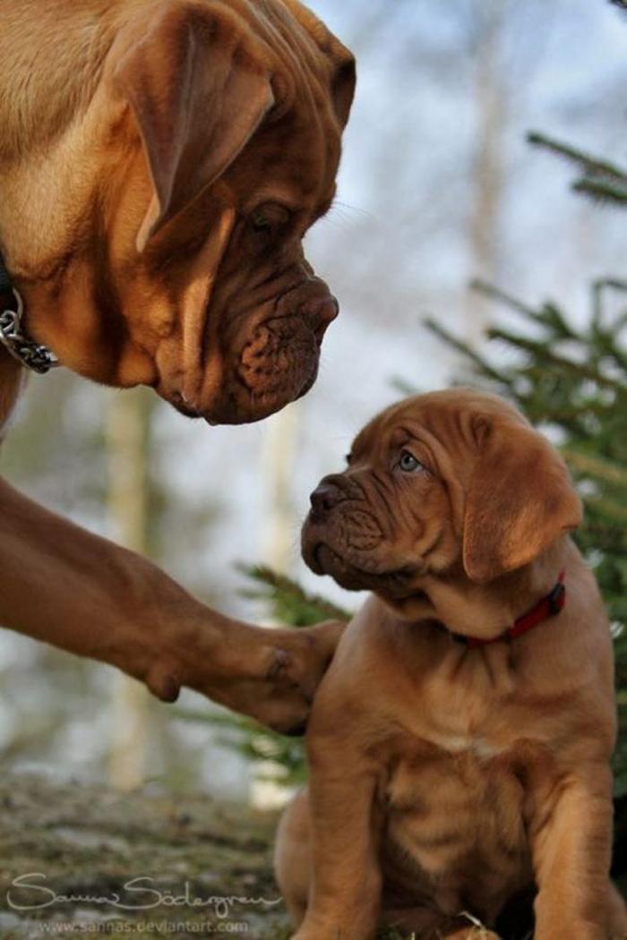 cani-con-cuccioli-30