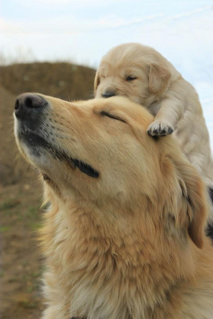 cani-con-cuccioli-31