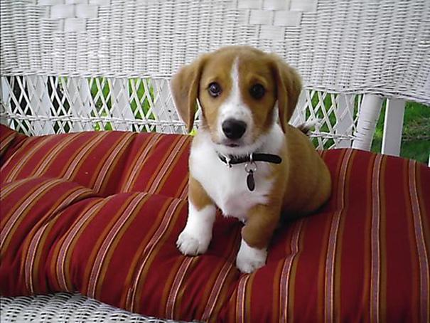 cani-meticci-incroci-razze-canine-04