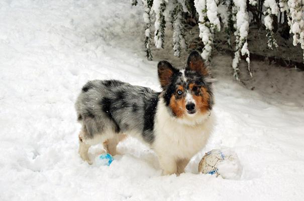 cani-meticci-incroci-razze-canine-10