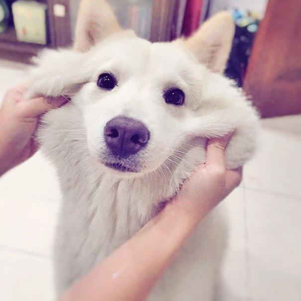 cani-meticci-incroci-razze-canine-19