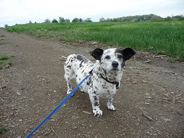 cani-meticci-incroci-razze-canine-30