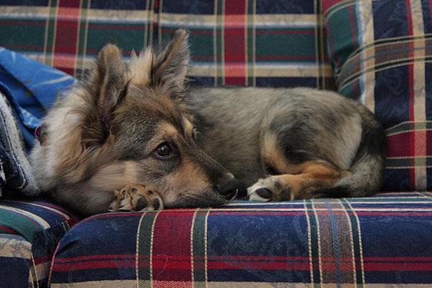 cani-meticci-incroci-razze-canine-39