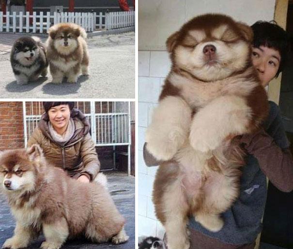 cani-meticci-incroci-razze-canine-40