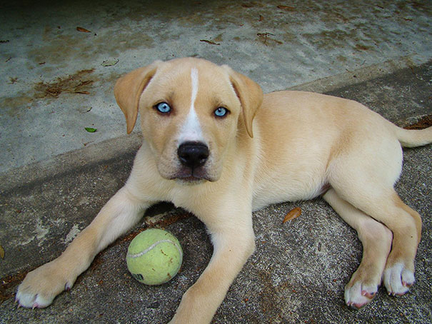 cani-meticci-incroci-razze-canine-41