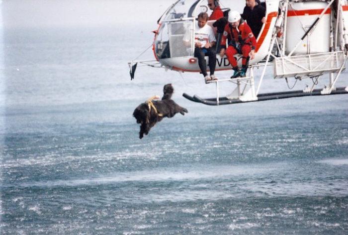 cani-terranova-salvano-vite-mare-1