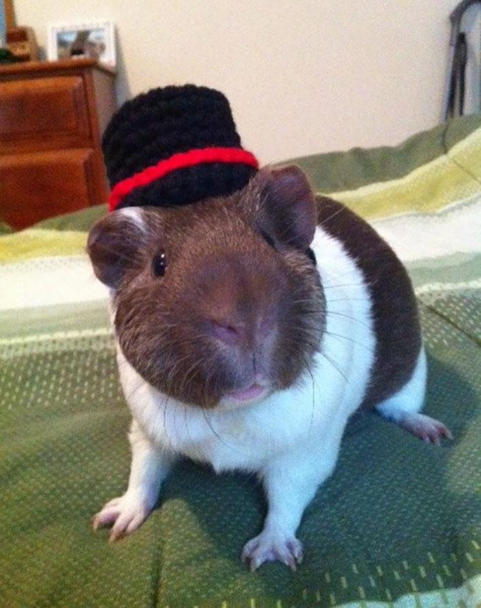cappelli-animali-uncinetto-fatti-mano-meredith-langley-12