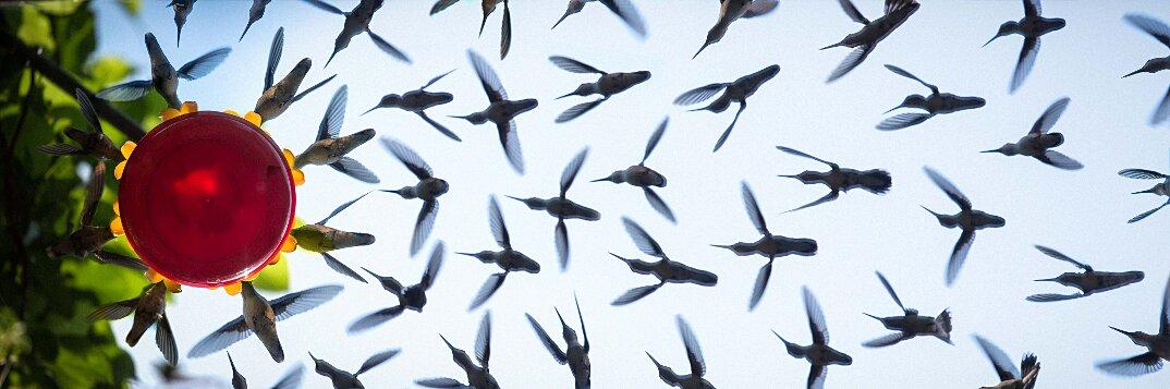 colibrì-mangiatoia-uccelli-in-volo-fotografia-1-keb