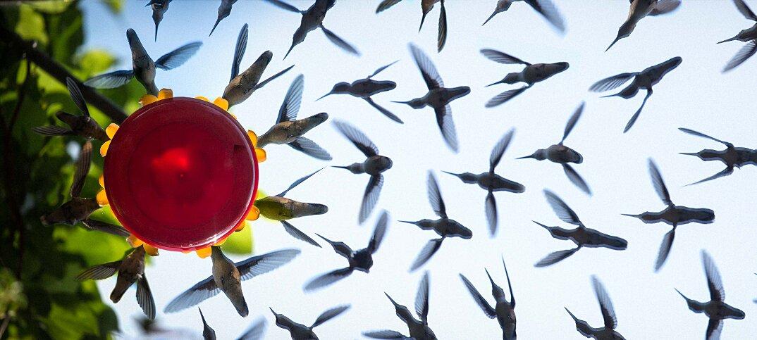 colibrì-mangiatoia-uccelli-in-volo-fotografia-2-keb