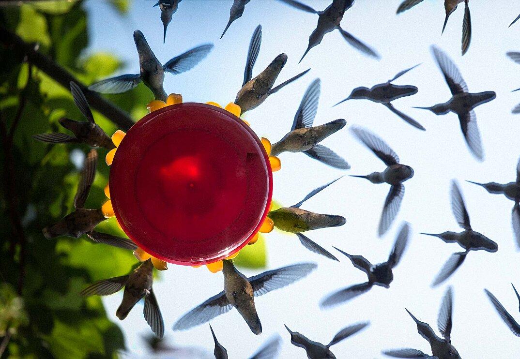 colibrì-mangiatoia-uccelli-in-volo-fotografia-3-keb