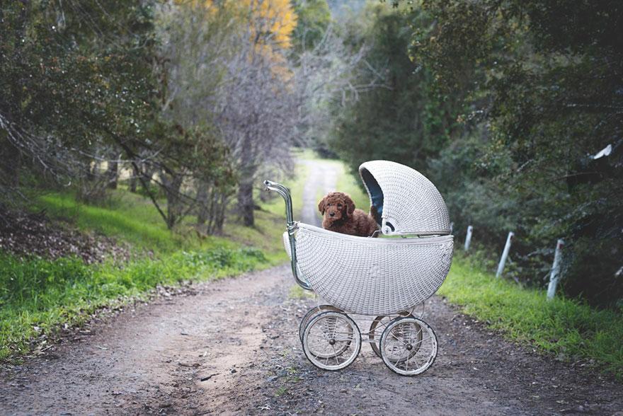 coppia-neonato-cane-elisha-minnette-fotografia-07