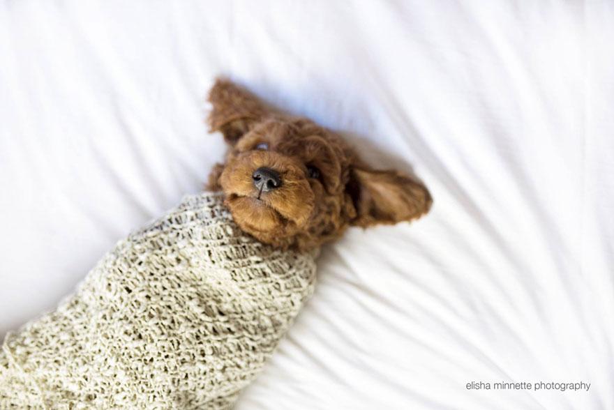 coppia-neonato-cane-elisha-minnette-fotografia-08