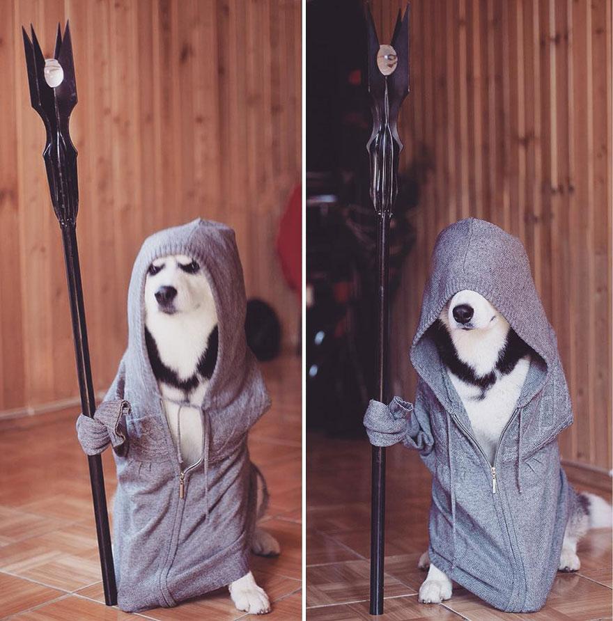 cuccioli-husky-siberiano-cani-instagram-erica-tcogoeva-02