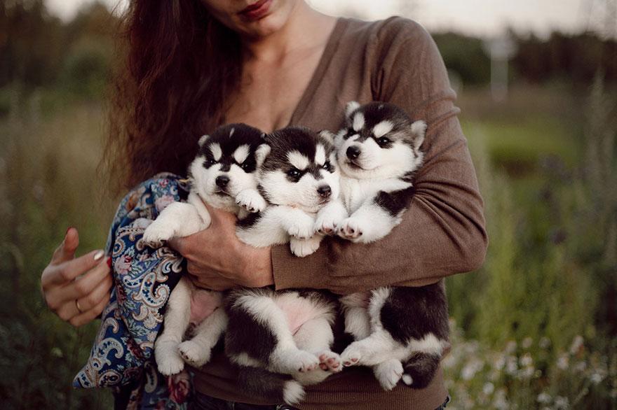 cuccioli-husky-siberiano-cani-instagram-erica-tcogoeva-12