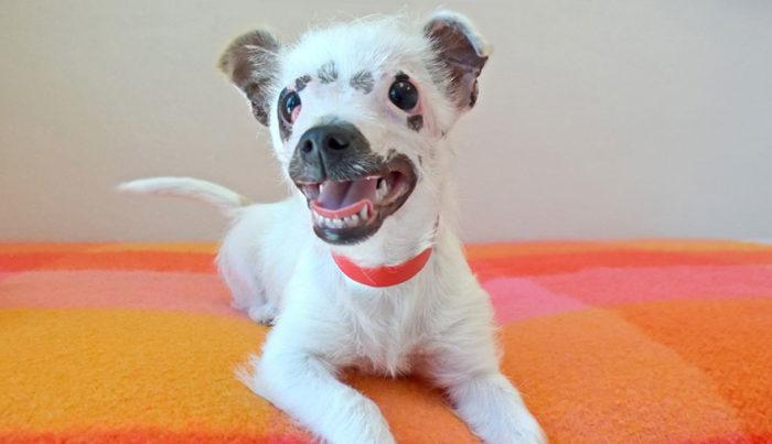 cucciolo-cane-strano-cicatrici-adottato-lucky-1