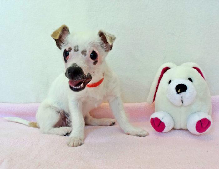 cucciolo-cane-strano-cicatrici-adottato-lucky-3