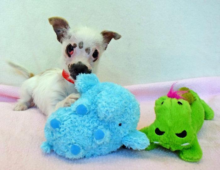 cucciolo-cane-strano-cicatrici-adottato-lucky-4