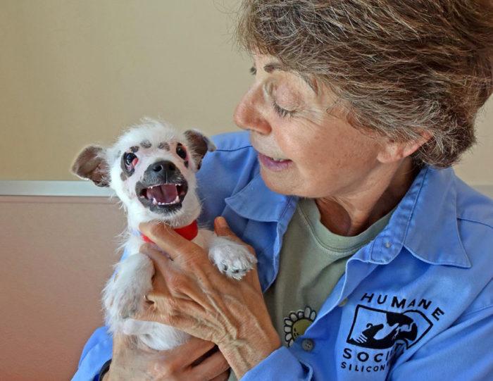 cucciolo-cane-strano-cicatrici-adottato-lucky-5
