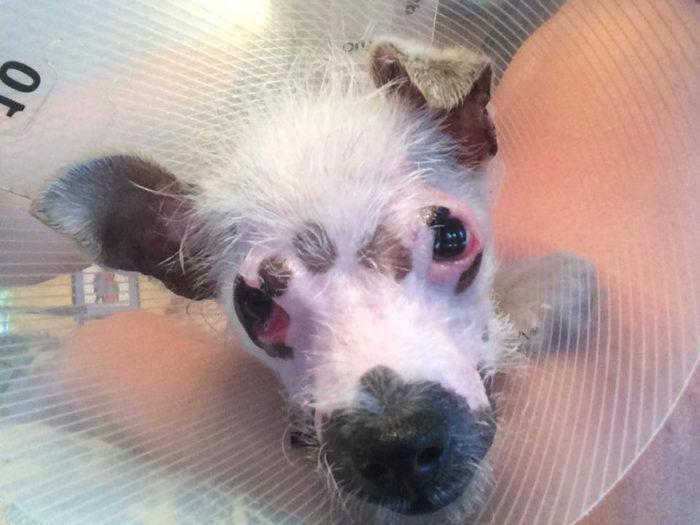 cucciolo-cane-strano-cicatrici-adottato-lucky-6