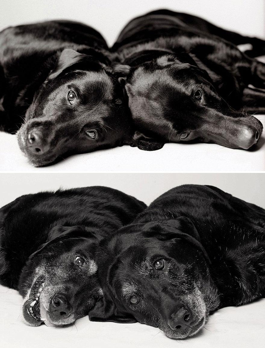 foto-cani-giovani-invecchiati-amanda-jones-03