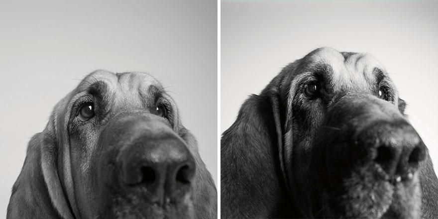 foto-cani-giovani-invecchiati-amanda-jones-07