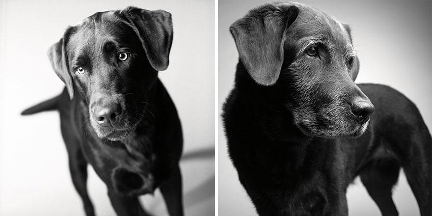 foto-cani-giovani-invecchiati-amanda-jones-08