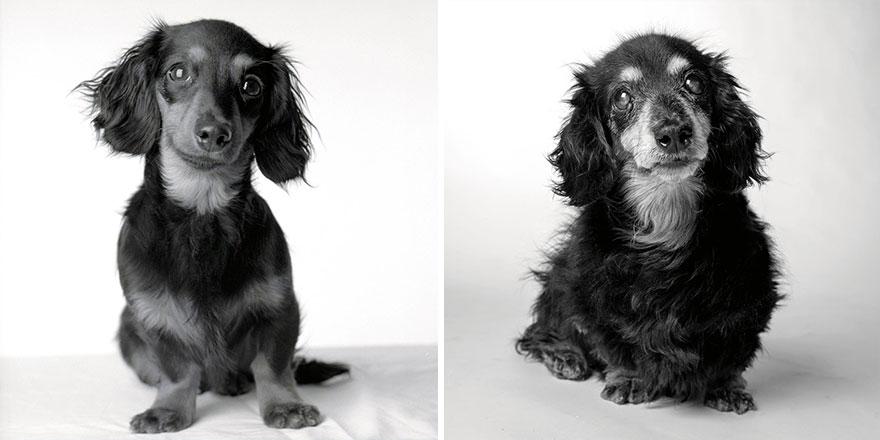 foto-cani-giovani-invecchiati-amanda-jones-10