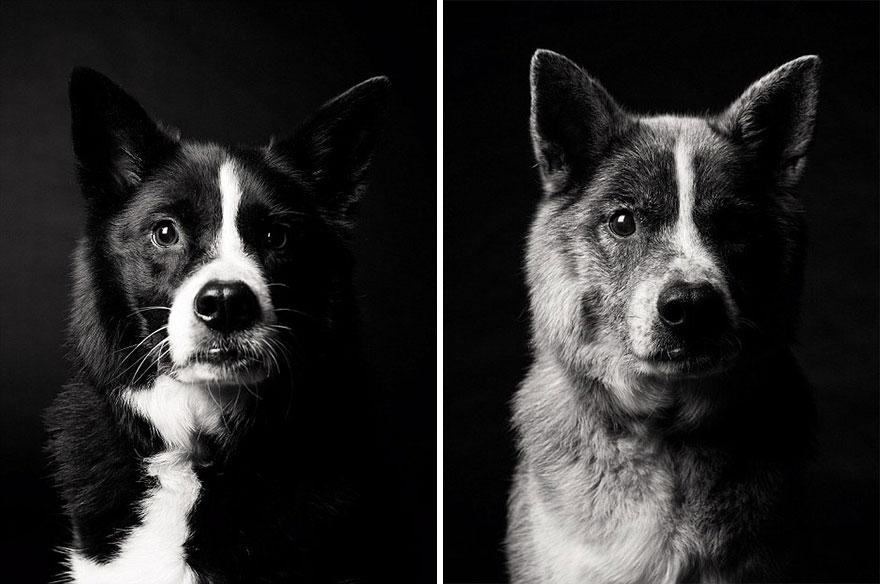 foto-cani-giovani-invecchiati-amanda-jones-11