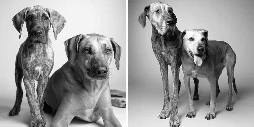 foto-cani-giovani-invecchiati-amanda-jones-12